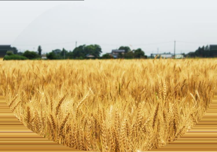 日本の穀物を挽くイメージ画像