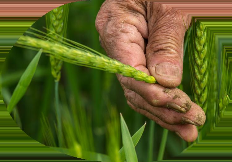 小麦に合わせた粉を挽くイメージ画像